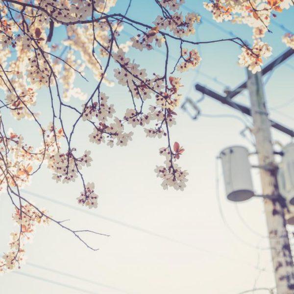 二、今年の花粉飛散量ってどれほどなの?