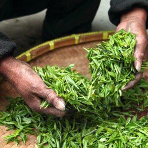 百一、狭山茶の茶匠がお送りする『茶師のアイス』