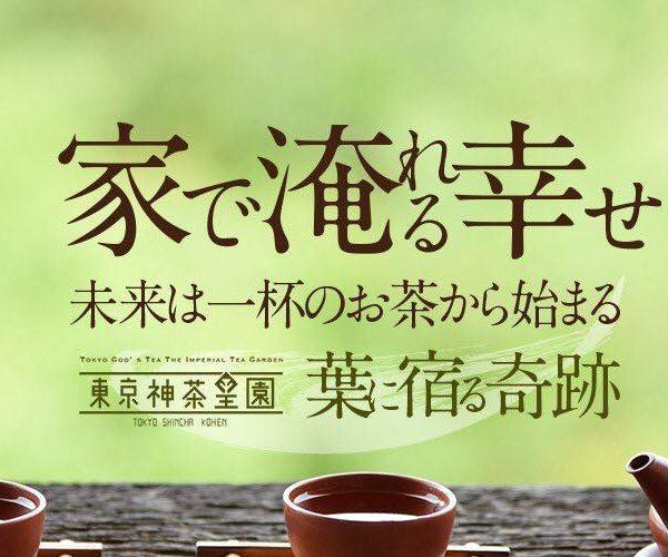 百十九宇、狭山茶の新茶が出そろいました!(ほぼ)